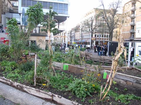 Stadslandbouw in centrum Freiburg