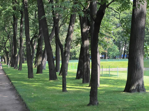 Losse bomen in parkweide