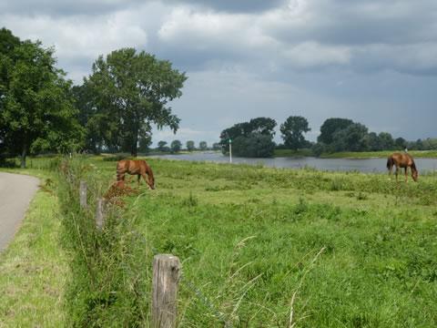 Uitzicht op de uiterwaarden van de Maas