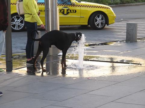 Hond heeft dorst