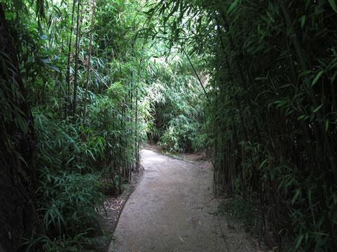 Besloten pad in Zoo