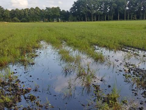 Wateroverlast in landelijk gebied