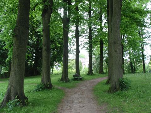 Bomenlaan in park Zutphen
