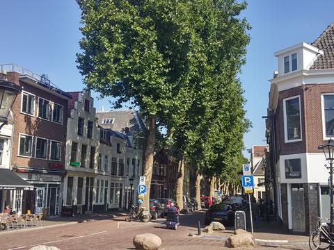 Fraaie bomen geven kleur aan markt