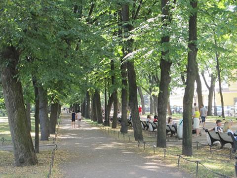 Bomenlaan in park
